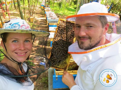ellenőrizzük a méhcsaládokat a méhesben :)