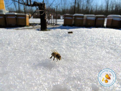havon megpihent méhecske