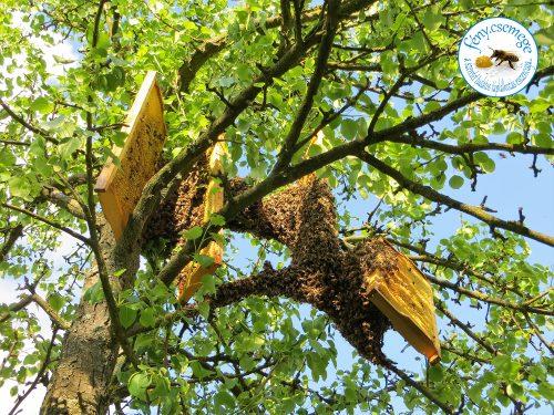 méhraj léprecsalása