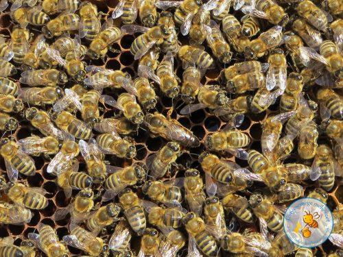 méhanya és udvartartása