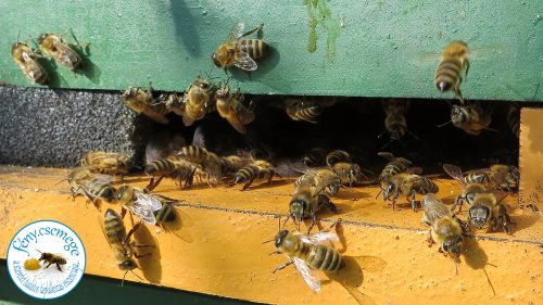 méhek a kijáróban ventillálnak