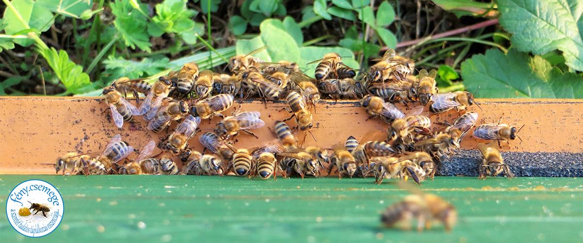 méhek a kijáróban