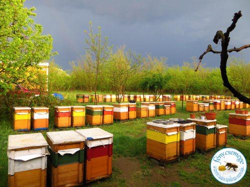 méhes eső után