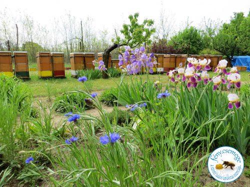 méhes tavasszal