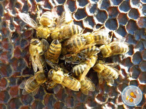 méhikék összebújva