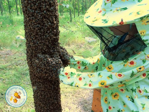 méhrajtól budás fa érintése