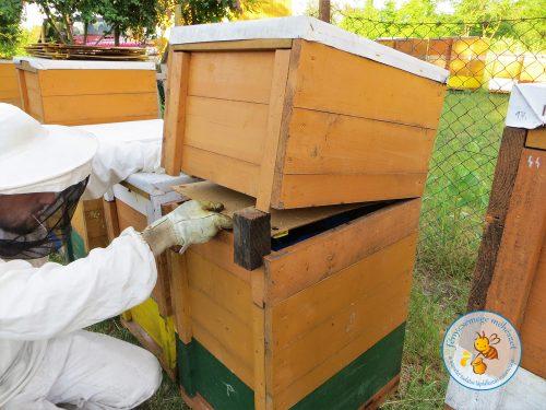 méz elvétele a mézesfiók alá helyezett szöktetőlappal