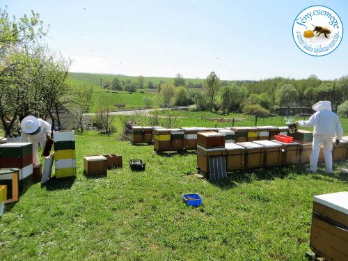 műveletek a méhesben
