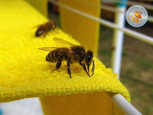 ruhaszárító méhike