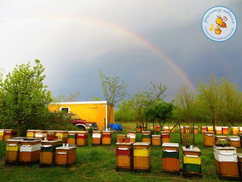 tavaszi zápor után szivárvány a méhesben